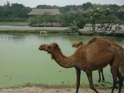 Safari World - Safari Park Bangkok Photo 14