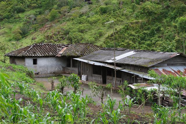 Maison paysanne au Nord de Cuellaje, 2000 m (Imbabura, Équateur), 10 décembre 2013. Photo : J.-M. Gayman