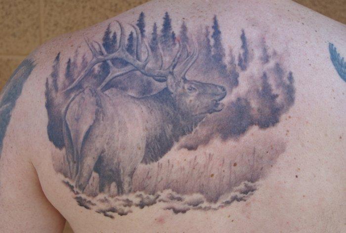 Dave's Elk