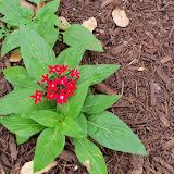 Gardening 2014 - 116_1267.JPG