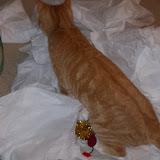 Christmas 2010 - 100_6388.JPG