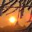 Sol em Dezembro's profile photo