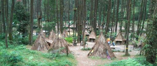 Hutan Pinus Sekipan Tawangmangu