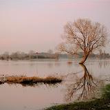 Hoogwater januari 2012