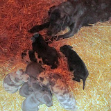 Saffy's babies @ 4 weeks