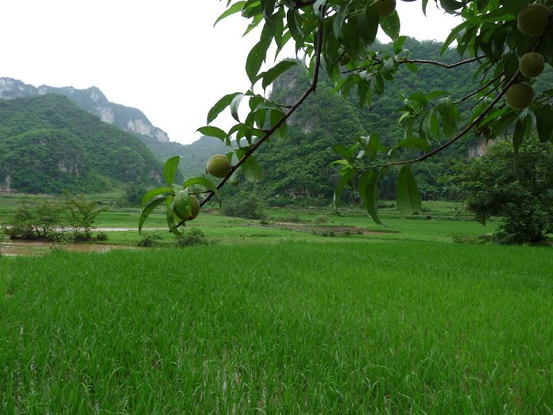 Chine . Yunnan BA MEI 2 - P1260915.JPG