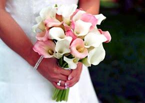 calla lily pink white
