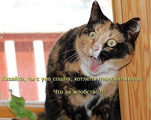 1430551539_kotomatricy-31
