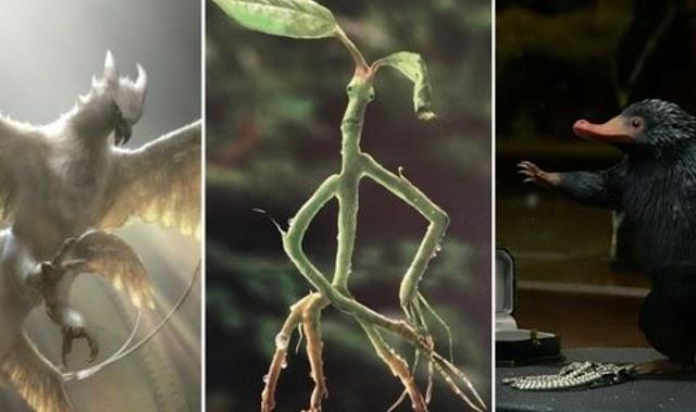 Animais fantásticos: 10 coisas que só os fãs do livro de Harry Potter sabem sobre as criaturas