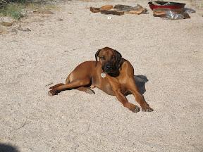 Desert Dog Diesel