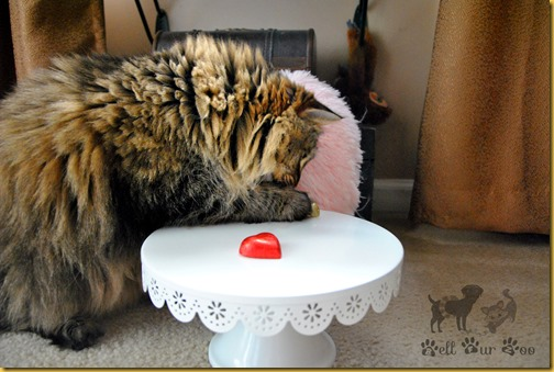 Matilda Valentines February 15th  (©Bell Fur Zoo)