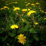 Spring (23 of 25).jpg