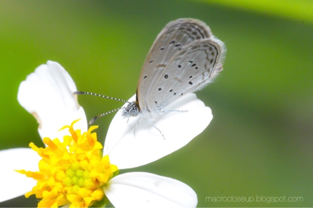 Macro Photo - Butterfly