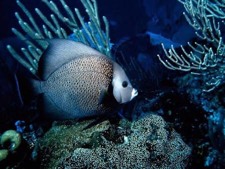 Các loài động vật sống dưới nước