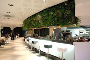 Mur végétal suspendu dans un bar de Grenoble bandol
