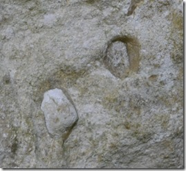 11b fossils