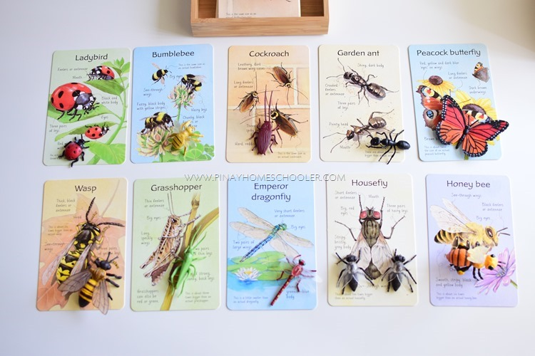 Insects Fact Cards