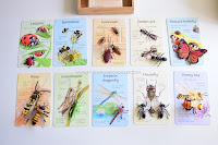 What are Insects?