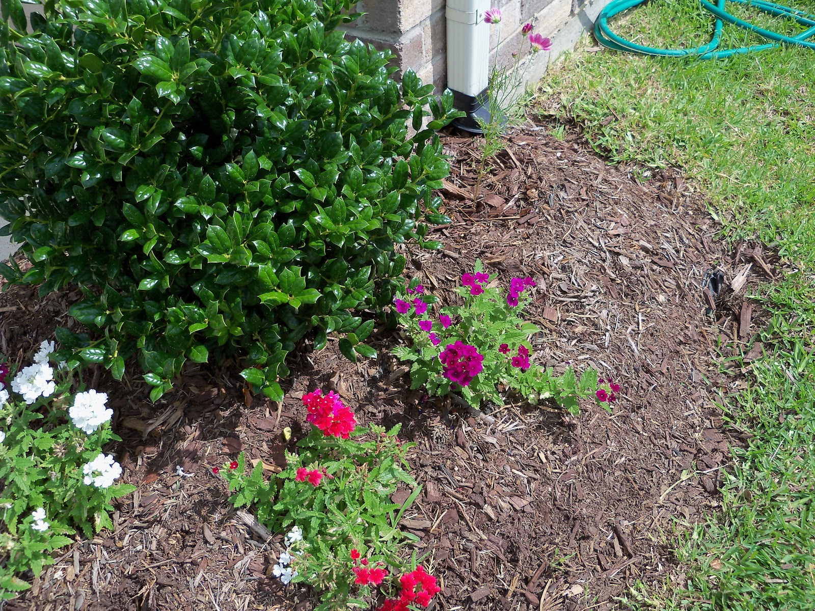 Gardening 2010, Part Two - 101_2859.JPG
