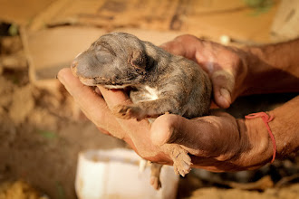 Photo: a new born pup at Sky Lawns