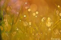 Goldene Lichtkreise (http://www.Naturfoto-Steudner.de)
