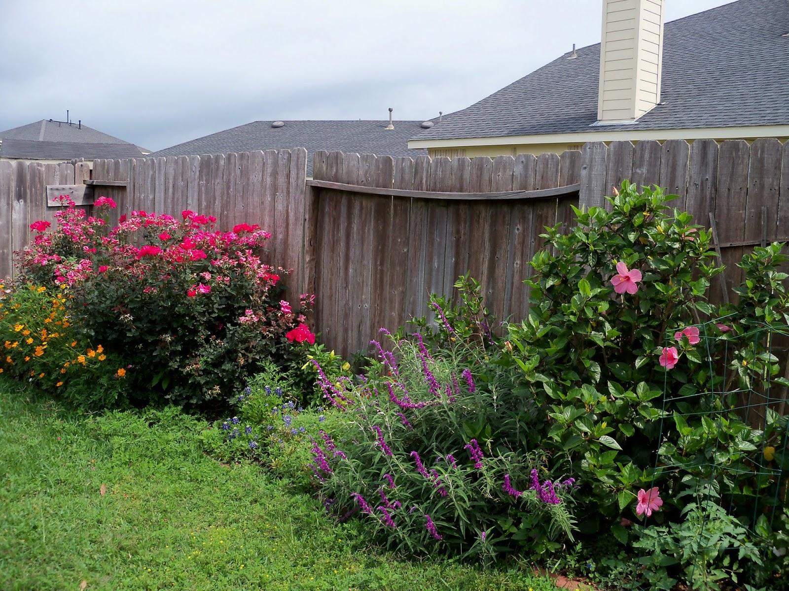 Gardening 2013 - 115_6052.JPG