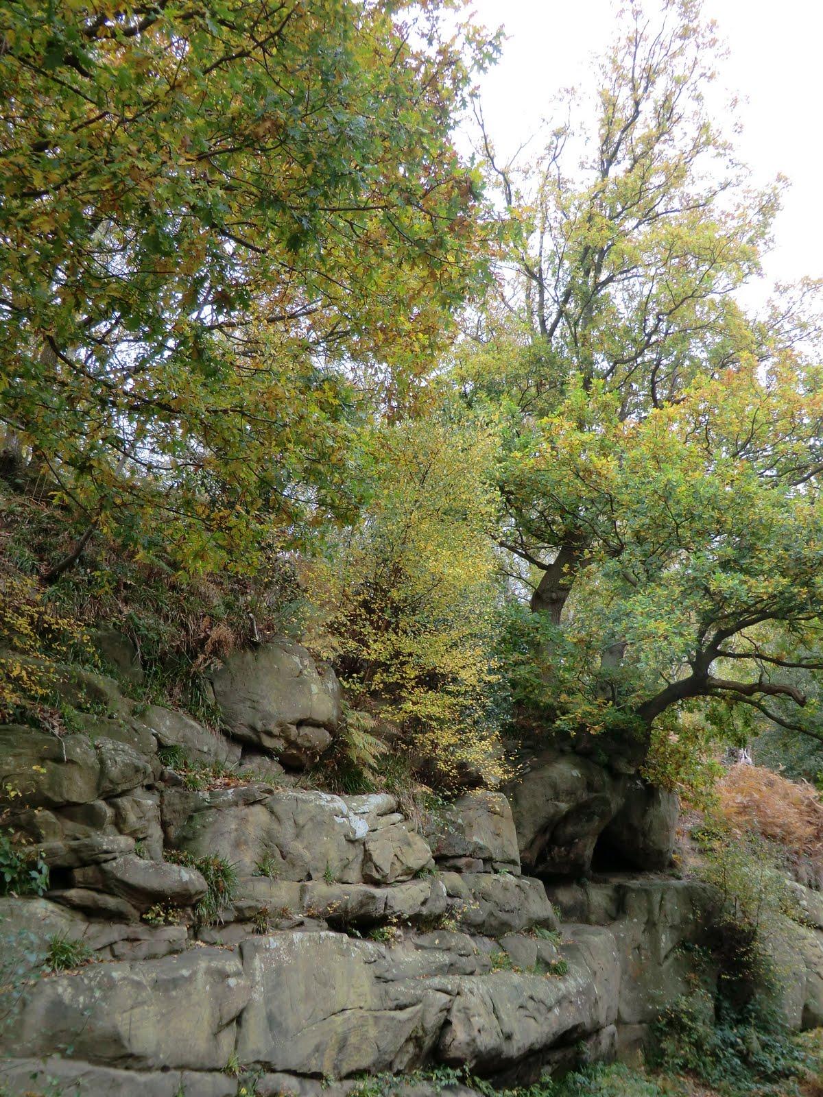 CIMG0212 Harrison's Rocks in autumn