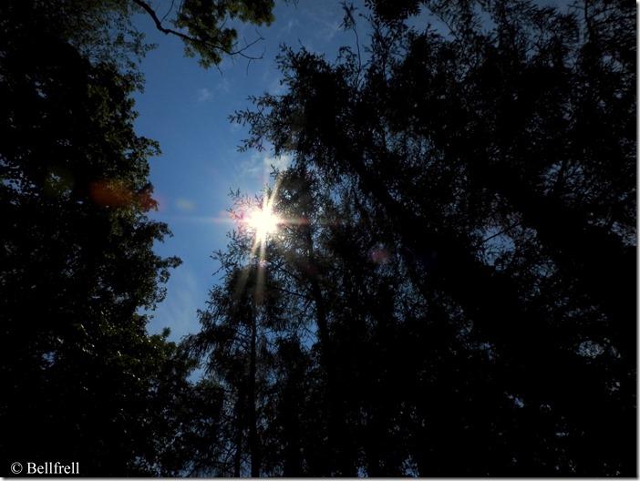 In die Sonne