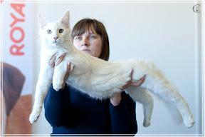 cats-show-25-03-2012-fife-spb-www.coonplanet.ru-035.jpg