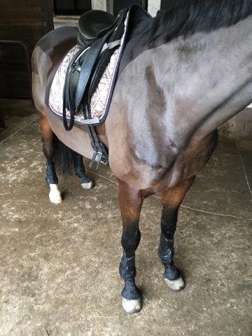 Baoblaze 2 Paar Pferde Stiefel Beinschutz Set