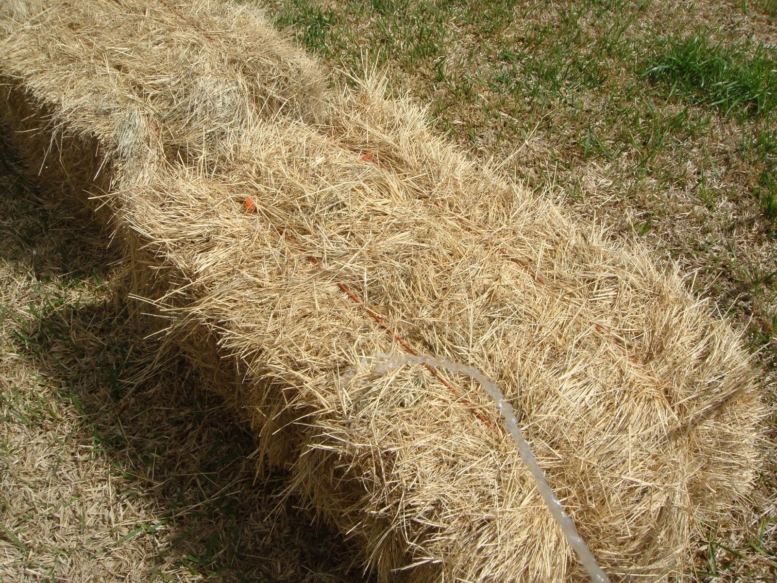 Hay Bale Gardening In Texas Garden Ftempo