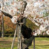 2014 Japan - Dag 10 - janita-SAM_6592.JPG