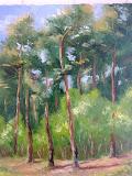 sosnowy las w rezerwacie Śliże, olej, płótno, 40x50cm