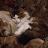 Sammi Sparkles avatar image