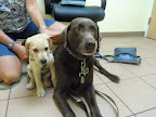 Elsa-and-Digby-Renda-Veterinarian-Atkinson-NH.jpg