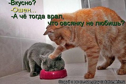 1406904218_novaya-kotomatrica-26