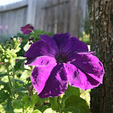 Gardening 2012 - IMG_3150.JPG