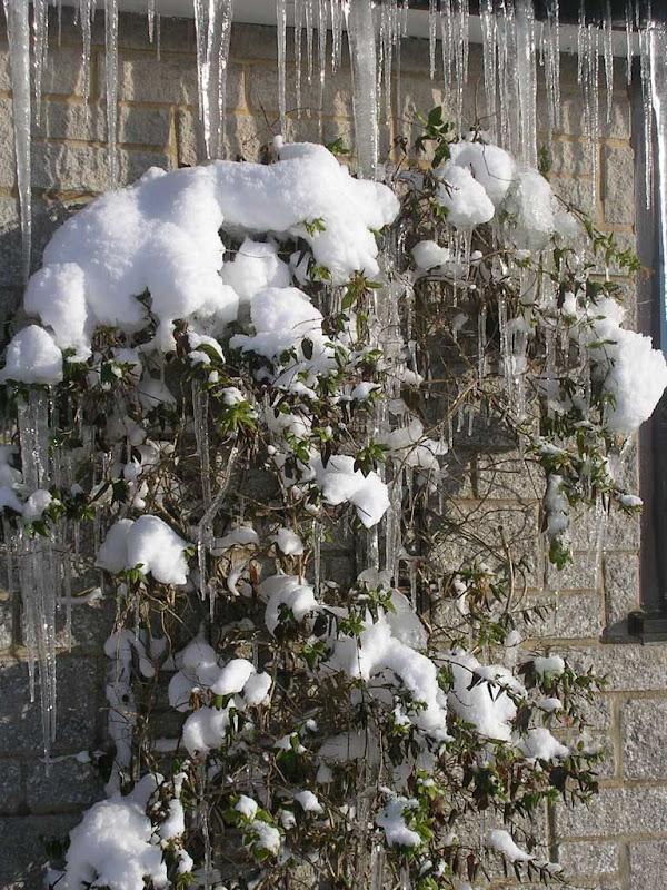 SnowKH9