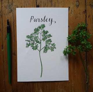 Parsley :: www.AliceDrawsTheLine.co.uk