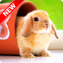 Cute Animal Wallpapers icon