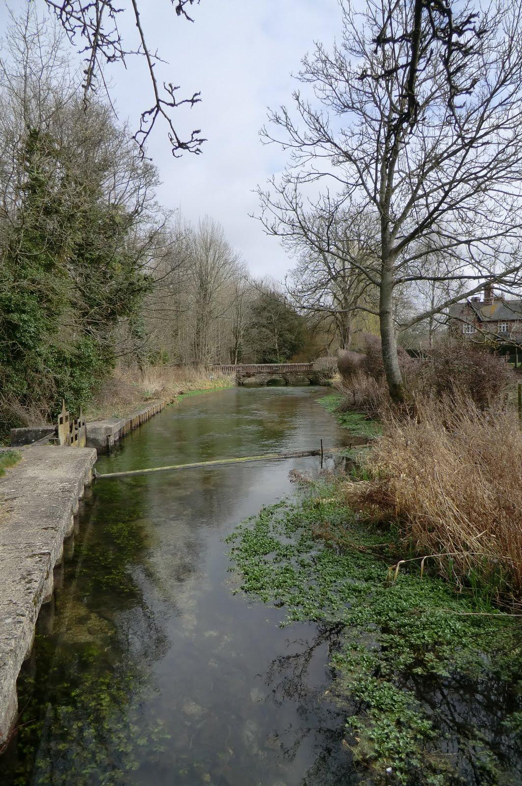 CIMG1703 River Test at Freefolk