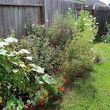 Gardening 2010, Part Three - 101_5195.JPG