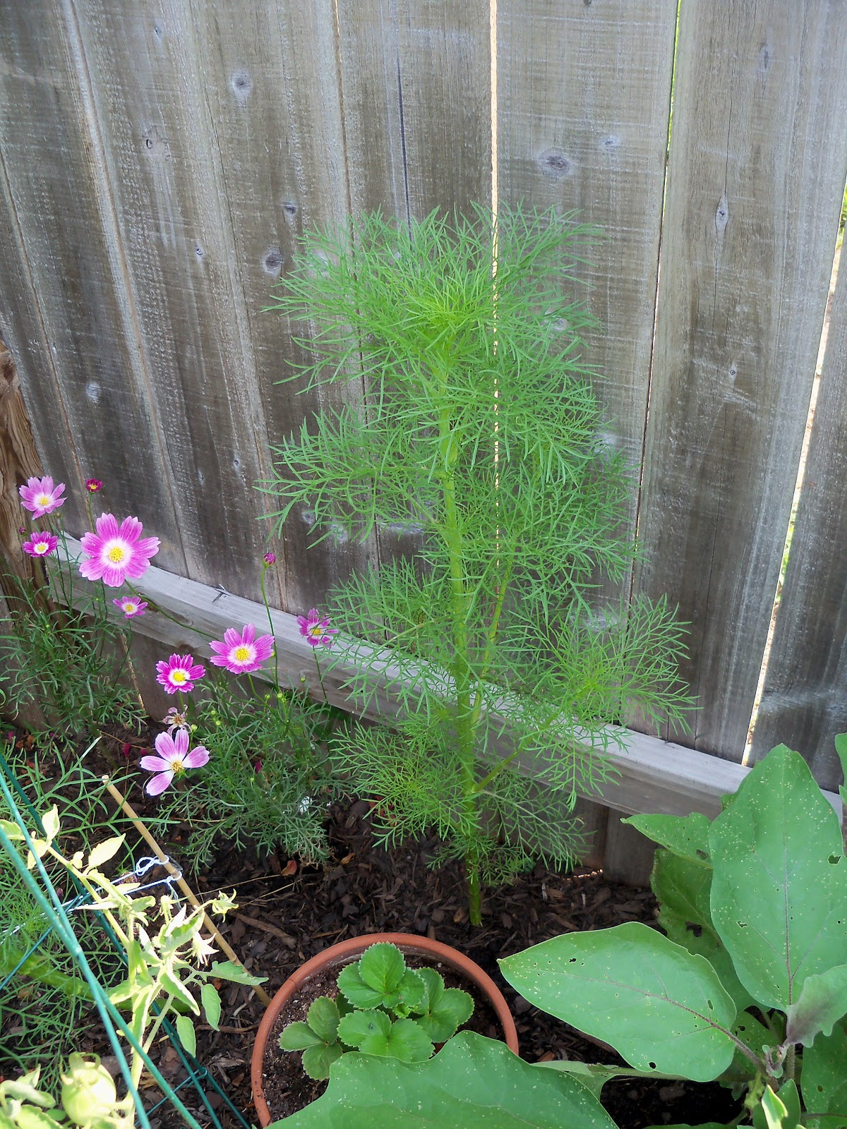 Gardening 2010, Part Two - 101_3079.JPG