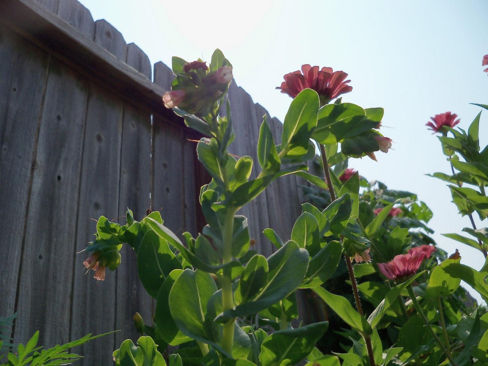 Gardening 2011 - 100_9344.JPG