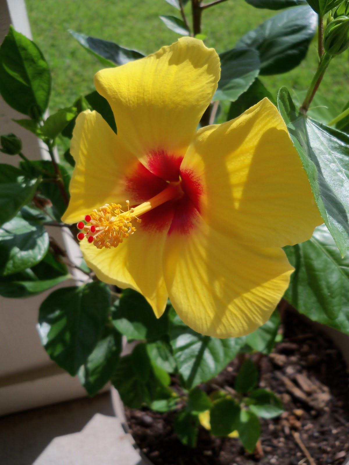 Gardening 2010, Part Three - 101_4987.JPG
