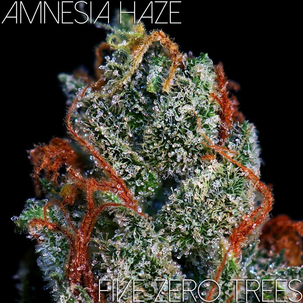 Amnesia Haze Oct MAcro 5