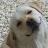 Mikki G. Wa avatar image