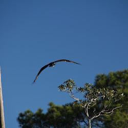 Fowl Marsh from Boat Feb3 2013 039