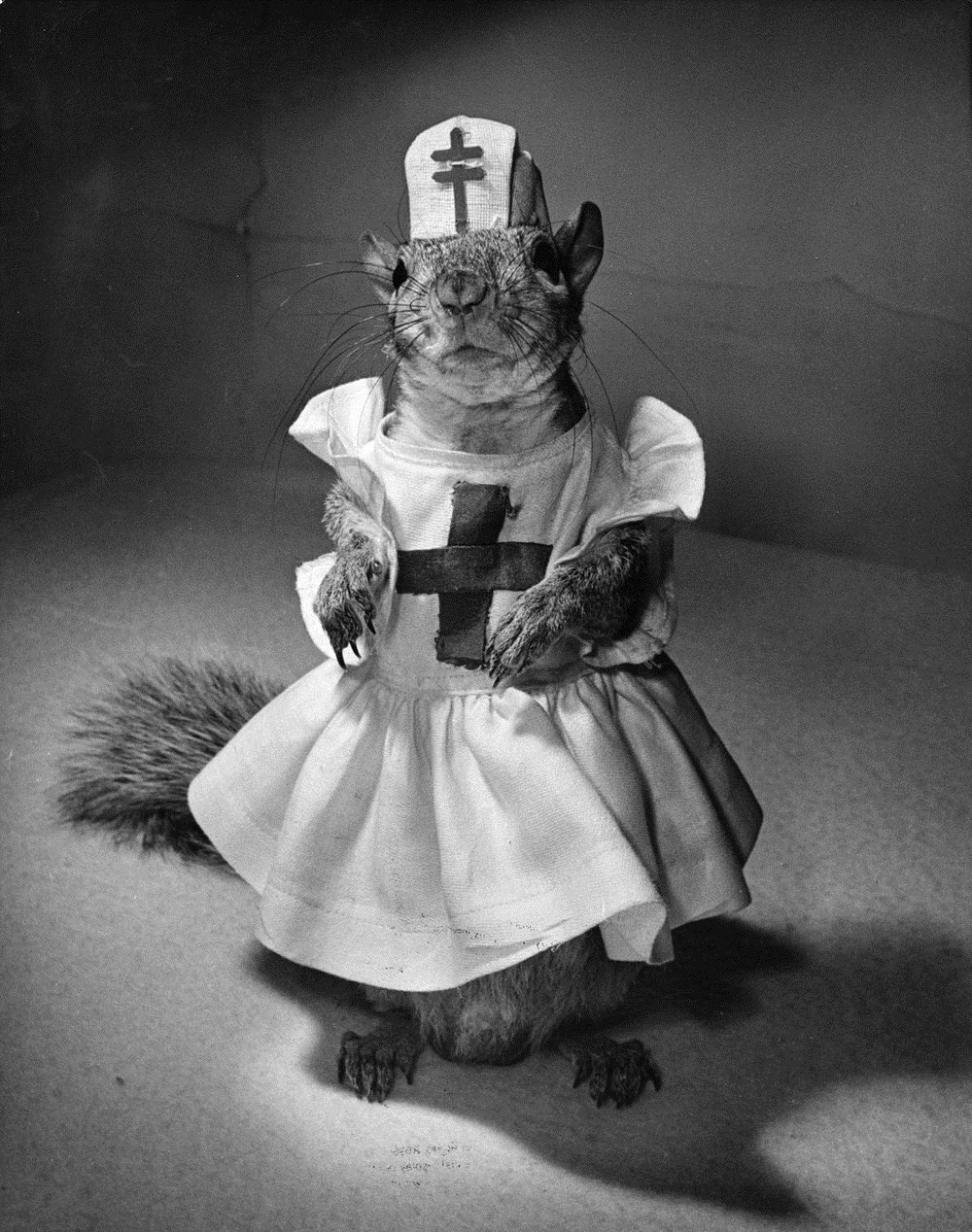 tommy-tucker-squirrel-3