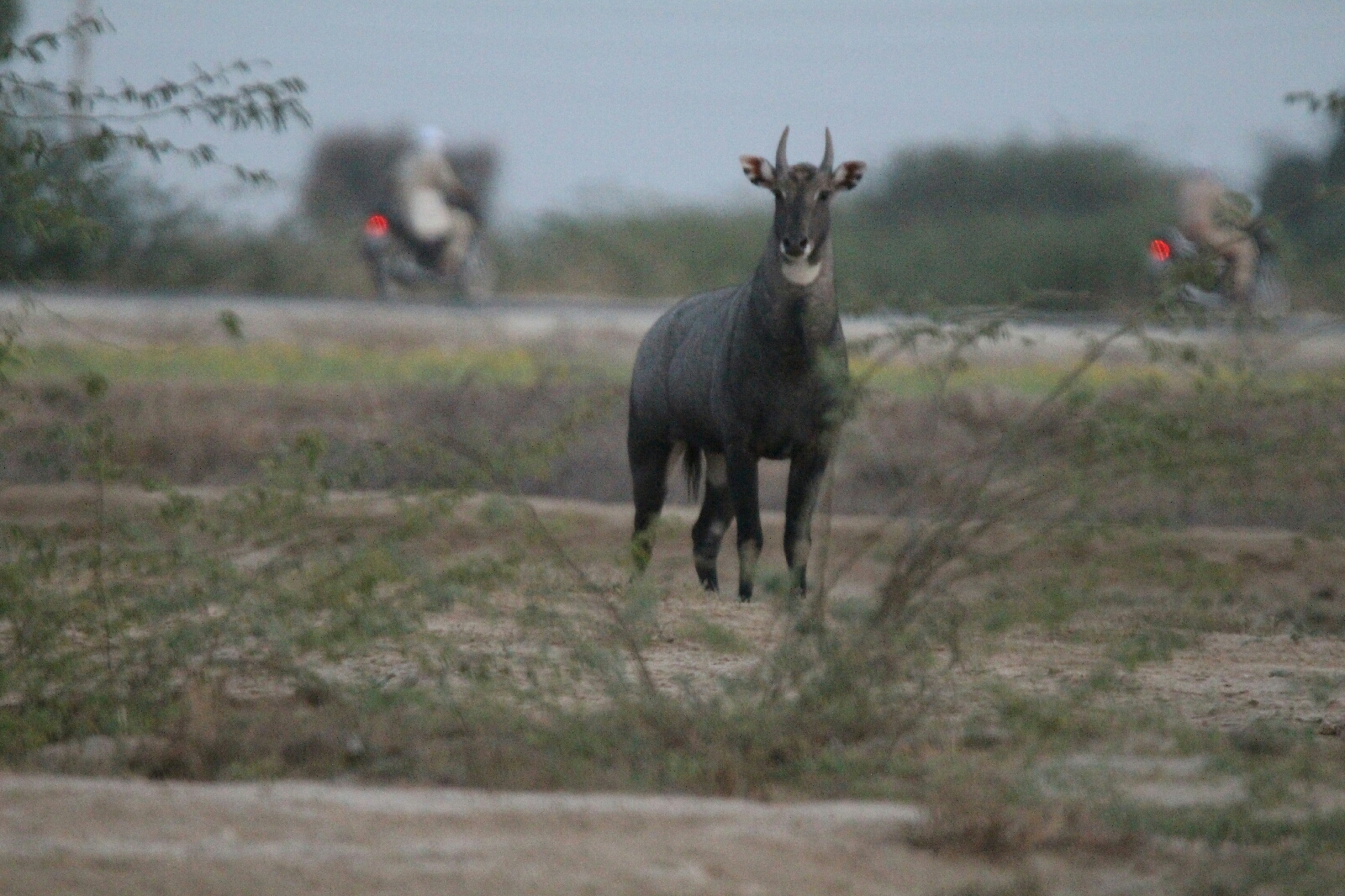 nilgai nilgai habitat nilgai picture nilgai video nilgai image nilgai facts नीलगाय nilgai animal nilgai meat nilgai attack nilgai accident nilgai animal in hindi nilgai animal images nilgai attack on man nilgai age nilgai blue bull nilgai bihar nilgai baby nilgai bhagane ka nilgai bhagane ka jugad nilgai belongs to the following family nilgai belong to which family nilgai cow nilgai colour nilgai cartoon nilgai classification nilgai culling nilgai calf nilgai cow images nilgai deer nilgai delhi nilgai dangerous nilgai drawing nilgai delhi airport nilgai dikhao nilgai nilgai description nilgai english meaning nilgai endangered nilgai english name nilgai english nilgai english word nilgai eating habits nilgai endangered species nilgai euro mount nilgai hunting nilgai height nilgai hindi nilgai hybrid nilgai haryana nilgai hunting in india nilgai hd video 375 h&h nilgai nilgai india nilgai in hindi nilgai in english nilgai iucn status nilgai in delhi nilgai in gurgaon nilgai janwar nilgai jump nilgai junglee nilgai jungali nilgai jangli janwar nilgai janwar ka photo nilgai jerky nilgai jangli nilgai nilgai kya hoti hai nilgai ki tasveer nilgai kya hai nilgai ka chitra nilgai kya hota hai nilgai ka video nilgai kaisa hota hai nilgai ki awaz nilgai lifespan nilgai location nilgai laguna atascosa nilgai leather nilgai land cut nilgai look like nilgai logo nilgai laws in india nilgai milk nilgai mating nilgai means nilgai mating video nilgai mythology nilgai meat benefits nilgai m o que significa nilgai nilgai pics nilgai pronunciation nilgai population nilgai price nilgai pashu nilgai power nilgai price in india nilgai qurbani nilgai running nilgai rajasthan nilgai recipes nilgai rug nilgai roast recipes nilgai range nilgai range texas nilgai ribs nilgai scientific name nilgai speed nilgai sound nilgai state animal nilgai schedule nilgai speciality nilgai status nilgai song what is a nilgai nilgai texas nilgai tamil name nilgai telugu means nilgai texas hunt nilgai tracks nilgai taste nilgai texas range nilgai trophy nilgai upsc nilgai uses nilgai uttar pradesh nilgai up nilgai usa nilgai unscramble nilgai urine nilgai under nilgai video in hindi nilgai vitals diagram nilgai vitals nilgai vermin nilgai vs eland nilgai voice nilgai vs lion nilgai weight nilgai wild boar nilgai wikipedia in hindi nilgai wala cartoon nilgai wala video nilgai wpa nilgai wallpaper nilgai which type of animal nilgai youtube nilgai youtube video yturria ranch nilgai hunting young nilgai yturria ranch nilgai youtube nilgai hunting nilgai meat yield nilgai mating youtube nilgai zoo nilgai kill zone zoo animal nilgai 30-06 nilgai 25-06 nilgai nilgai 200 270 for nilgai nilgai 308 nilgai 30-06 308 vs nilgai 45-70 nilgai 450 bushmaster nilgai nilgai nilgai nilgai nilgai nilgai 6.5 creedmoor nilgai 7 mag for nilgai